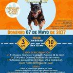 Carrera Atlètica Guardian Responsable 10 y 3 Km. (07/05/2017)